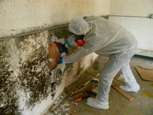 Большие площади поражения стен плесенью