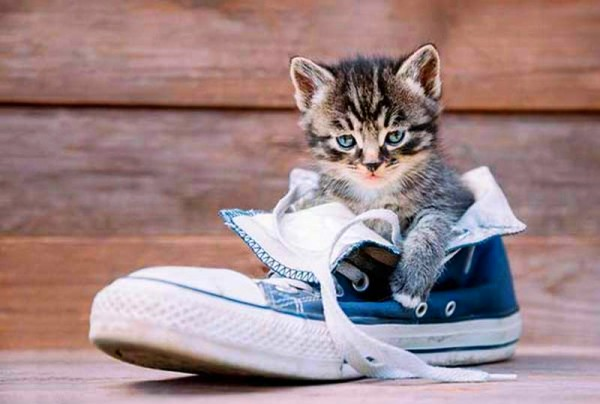 котенок в кроссовке