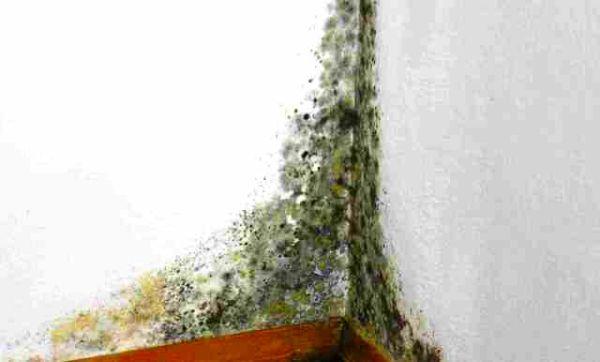Десятка лучших средства для уничтожения плесени в квартире