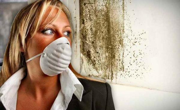 Плесень - частая причина запаха сырости